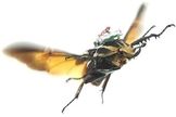 drone em besouros
