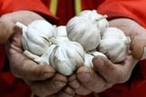 O alho pode ser bom para a saúde geral, mas não bloqueia o coronavírus. (Foto: Getty Images)