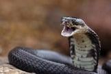 Serpente. (Foto: Rumoroyalbrasil's)