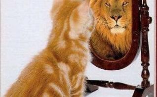 espelho_leão
