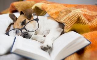 Conheça algumas dicas para equilibrar o descanso com os estudos. (Foto: Fly_dragonfly/iStock)