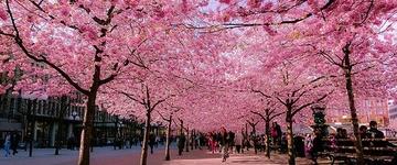 Conheça as ruas cobertas por árvores mais incríveis do mundo