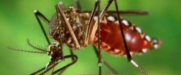 8 bairros que estão próximos a uma epidemia de dengue