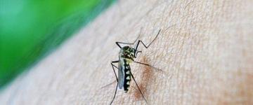 Saiba o que é vírus zika