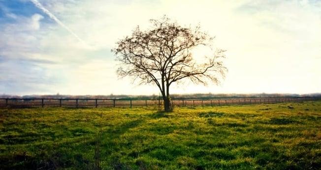 Árvore Seca. (Foto: Freepik)