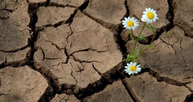 Flor na terra seca. (Foto: Adai)