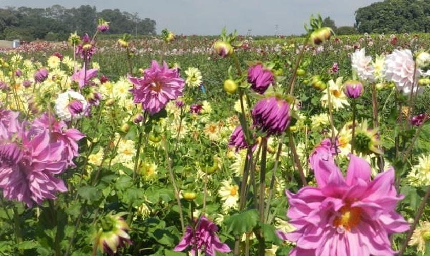 Flores _ Primavera