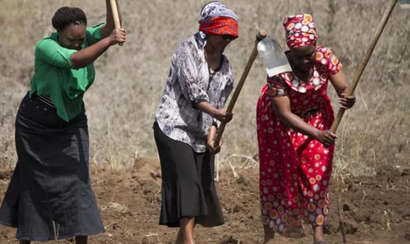 As mulheres das comunidades rurais estão se tornando especialistas na arte do cultivo de vegetais. (Foto: ASN).
