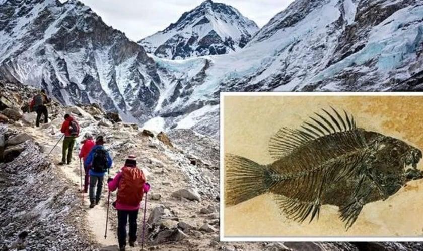 Especialistas mostram que restos de peixes fossilizados foram encontrados no monte Everest. (Imagem: Getty)