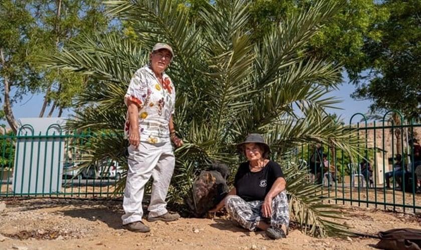 Dra. Elaine Solowey (à esquerda) com a tamareira que germinou de uma semente do período de Jesus. (Foto: Marcos Schonholz)