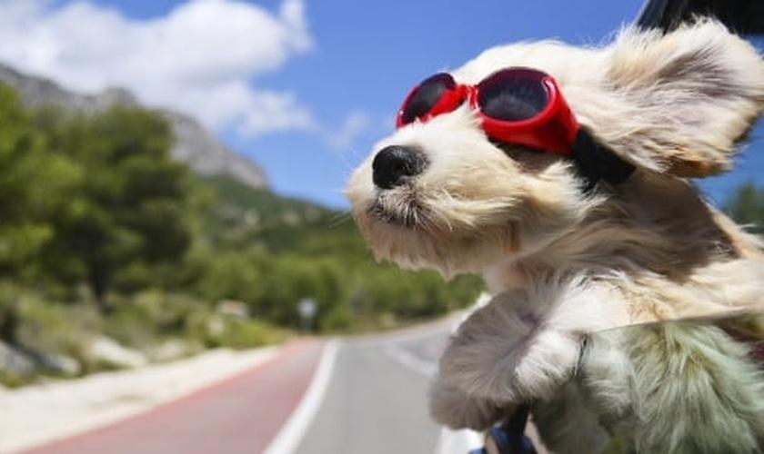 Existem regras para transportar os mascotes adequadamente dentro do carro. (Foto: Getty Images/iStockphoto)