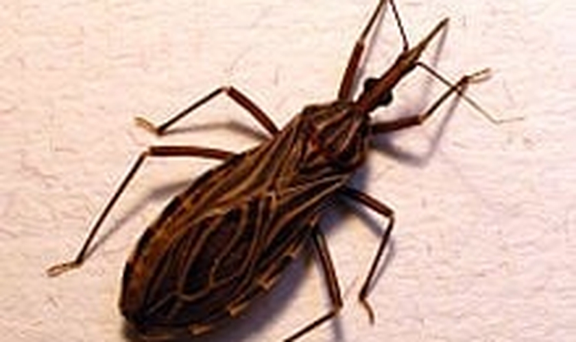 doença de Chagas