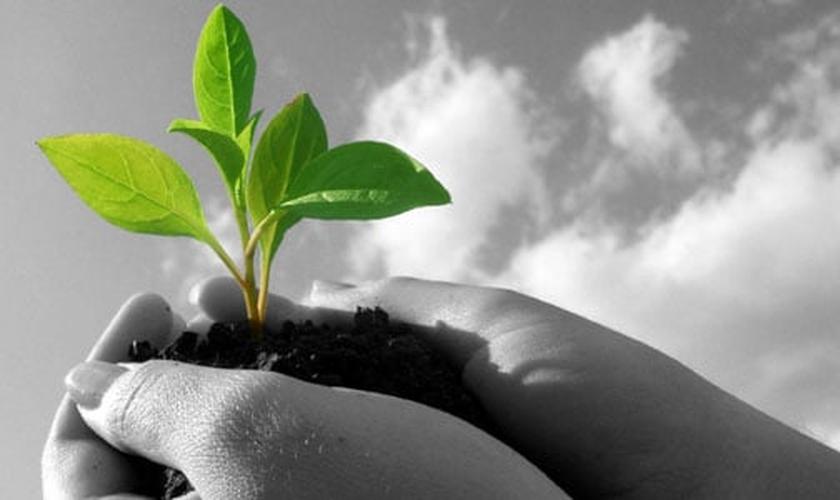 Planta crescendo_imagem ilustrativa