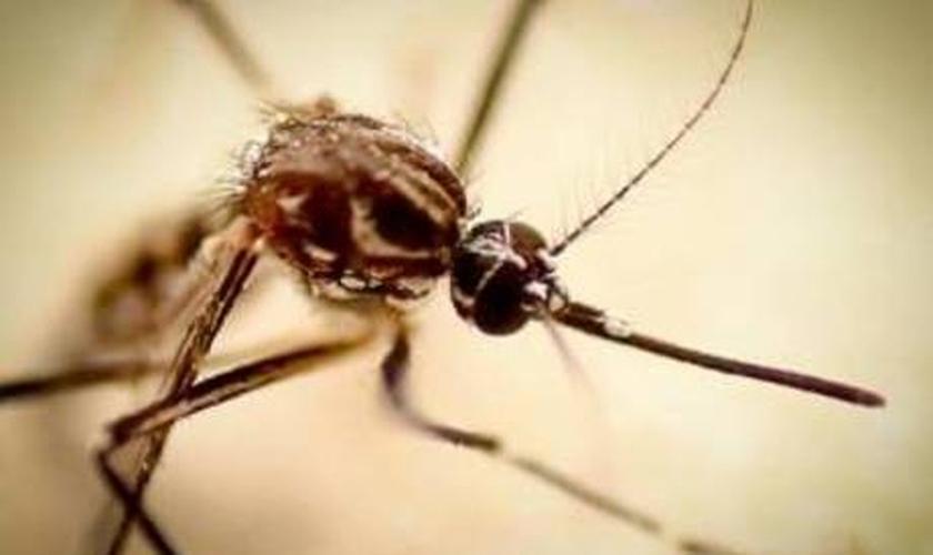Dengue x Gripe