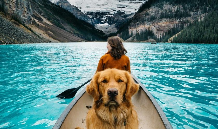 Viajar com seu animal de estimação exige planejamento, mas torna a viagem melhor. (Foto: Hunter Lawrence)