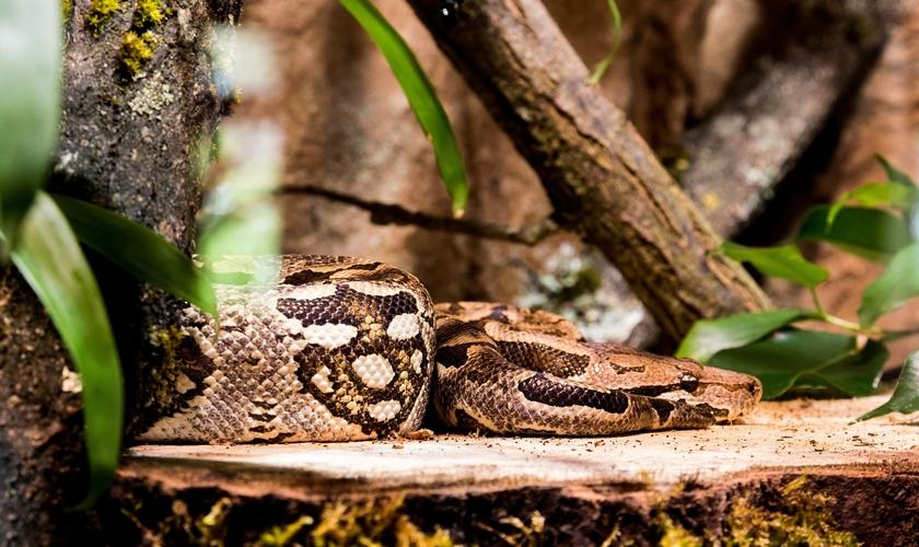 Imagem ilustrativa. Missionários foram livrados de ataque de cobra na Libéria. (Foto: Creative Commons/Max Pixel)