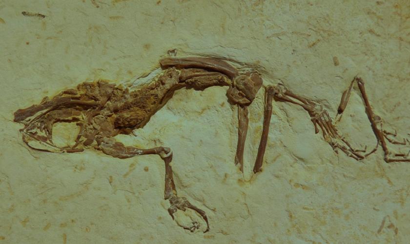 Descoberta foi feita na Formação Crato, local para estudos geológicos no Nordeste brasileiro. (Foto: Reprodução/Science Direct)