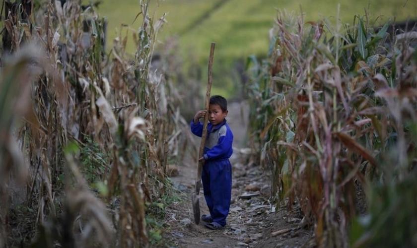 Criança norte-coreana se segura pá em um campo de milho murcho em uma parte do país afetada pela crise pandêmica. (Foto: Reuters)