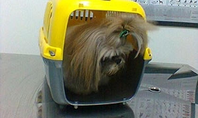 Animais de estimação poderão ser  transportado em ônibus coletivo
