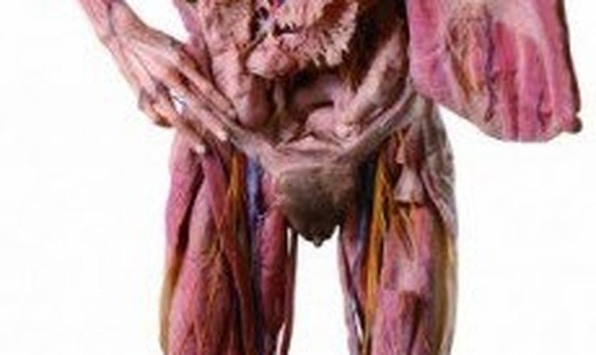 O Fantástico Corpo Humano