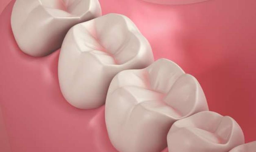 Função de cada dente