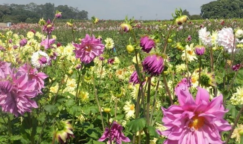 Flores _ Natureza