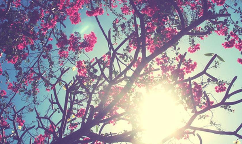 Primavera _ flores