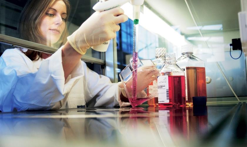 Durante o estudo, os pesquisadores focaram em uma parte do cérebro que detecta e resolve problemas. (Foto: Checklab)