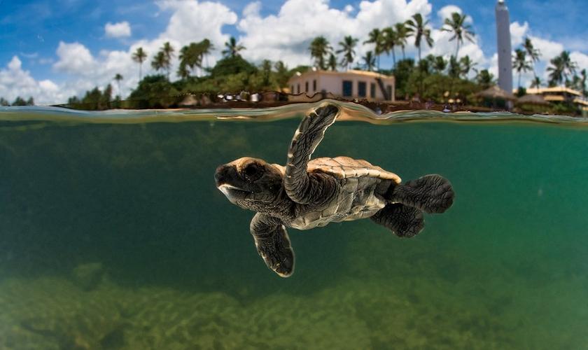 O Projeto Tamar foi criado para proteger da extinção as espécies de tartarugas. (Foto: Divulgação/Projeto Tamar)