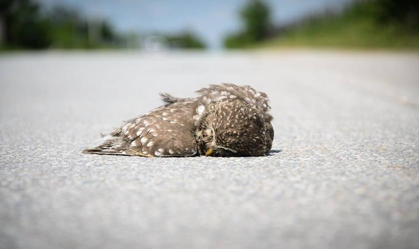 Algumas vezes esse pássaro morto está fora de nós! É circunstancial! Outras vezes está dentro de nós, e quando isso acontece a tareefa exige mais de nós. (Foto: Facebook)