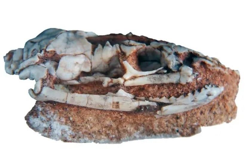 Descoberta de fóssil encravado em rocha. (Foto: Reprodução/JP)