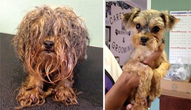 Veja o antes e depois de cães resgatados